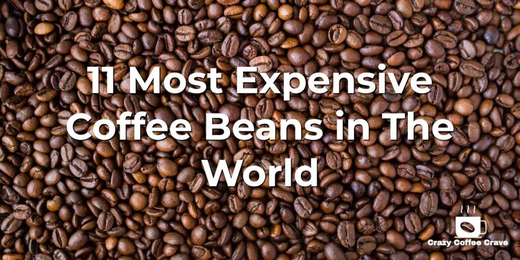 11 Most Expensive Coffee Beans in The World