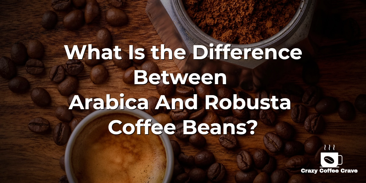 What Is the Difference Between Arabica vs Robusta Coffee Beans?
