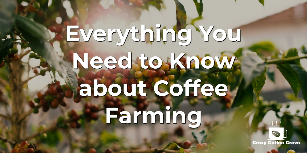 Everything You Need to Know about Coffee Farming