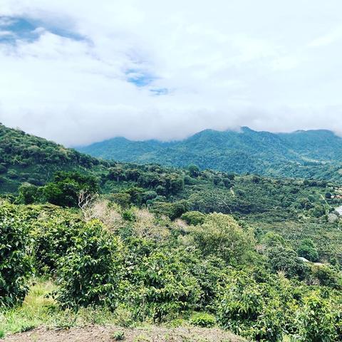 microclimate coffee farm