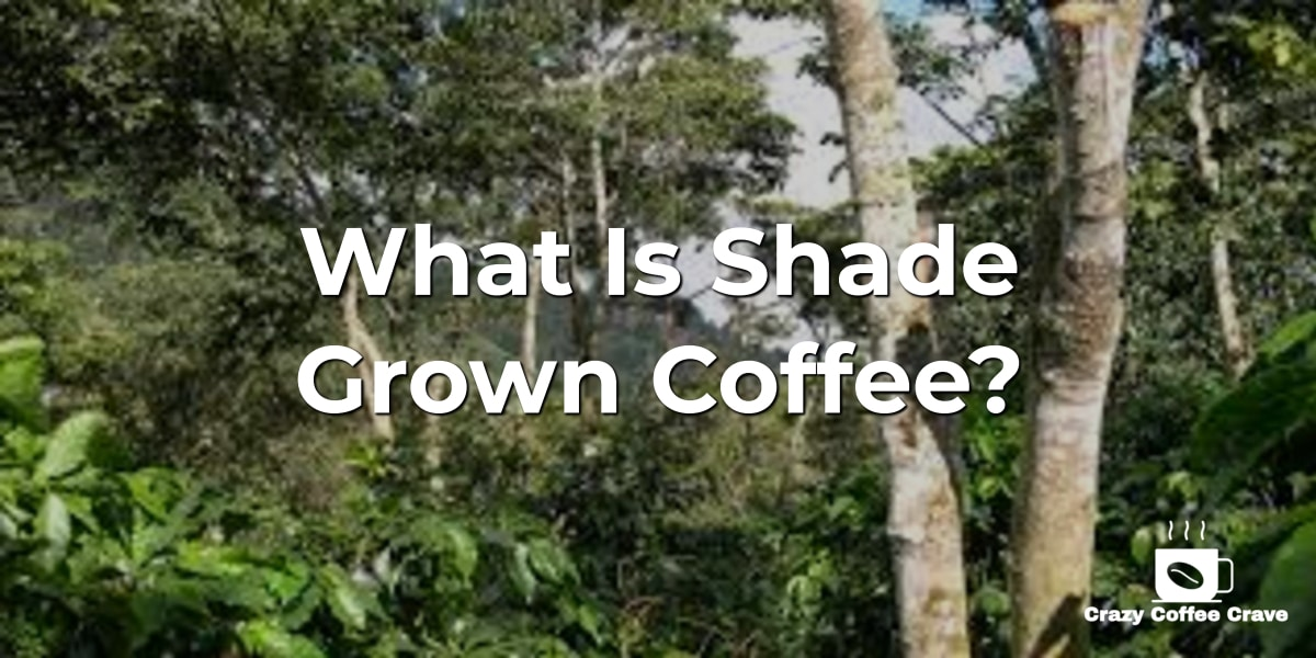 What Is Shade Grown Coffee?