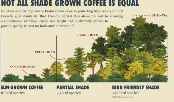 shade grow coffee
