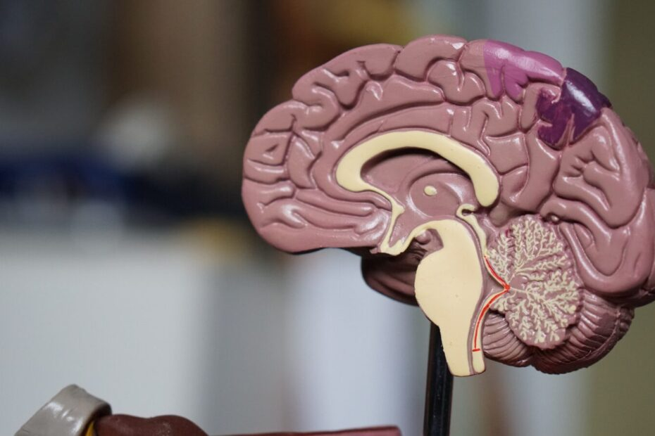 brown brain decor in selective-focus photography