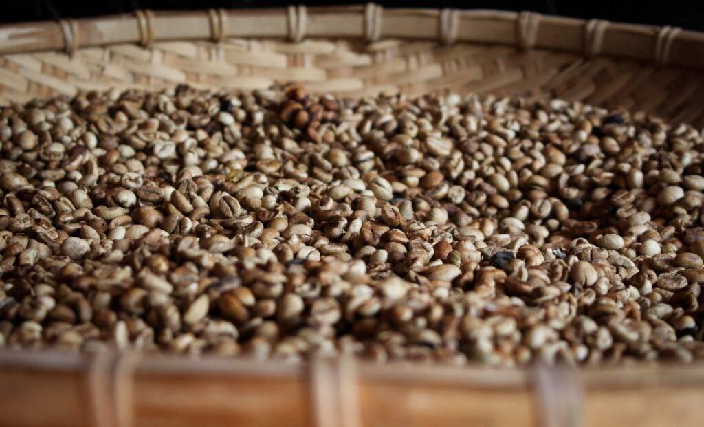 coffee beans in brown winnowing basket
