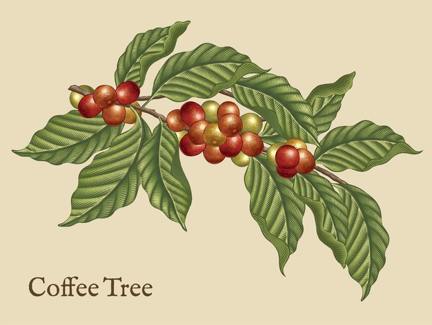 coffee tree elements retro coffee plants etching shading style with color 281653 2082