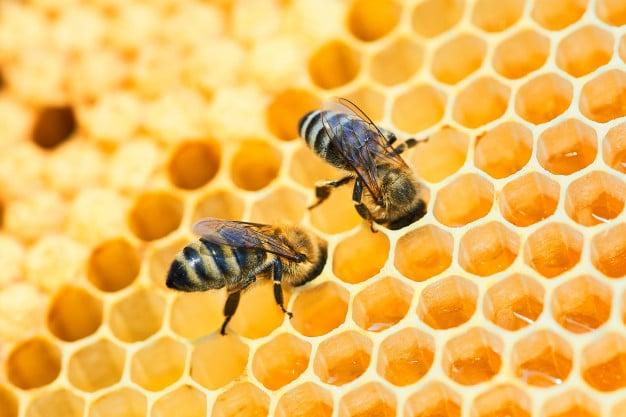 macro photo bee hive honeycomb with copyspace bees produce fresh healthy honey 168410 369