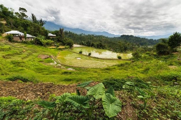traditional village sulawesi indonesia 107467 2638